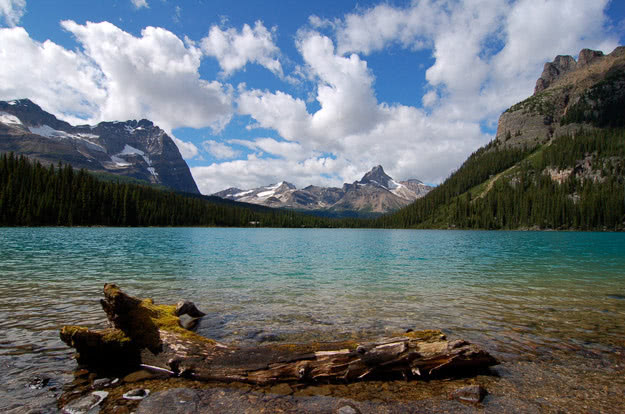 Lake O'Hara in Yoho National Park