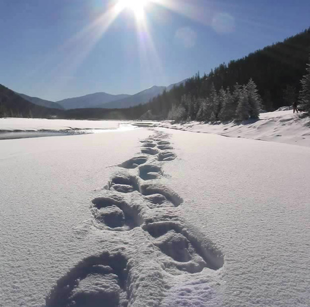 Fresh tracks shimmer in the Yoho winter